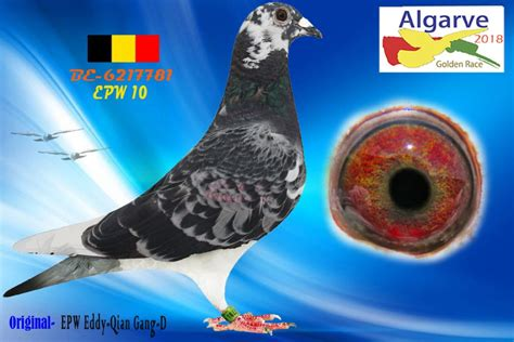 Current auctions | International Pigeon Events